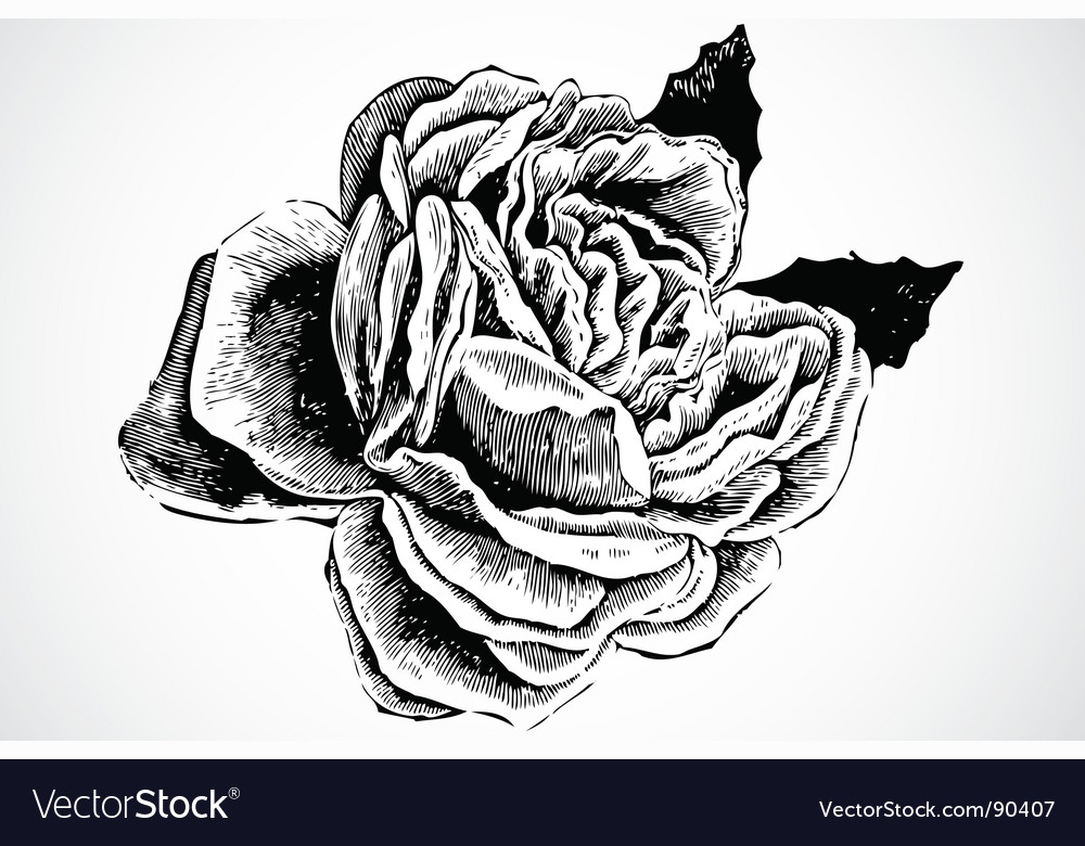 Woodcut rose Vector Image
