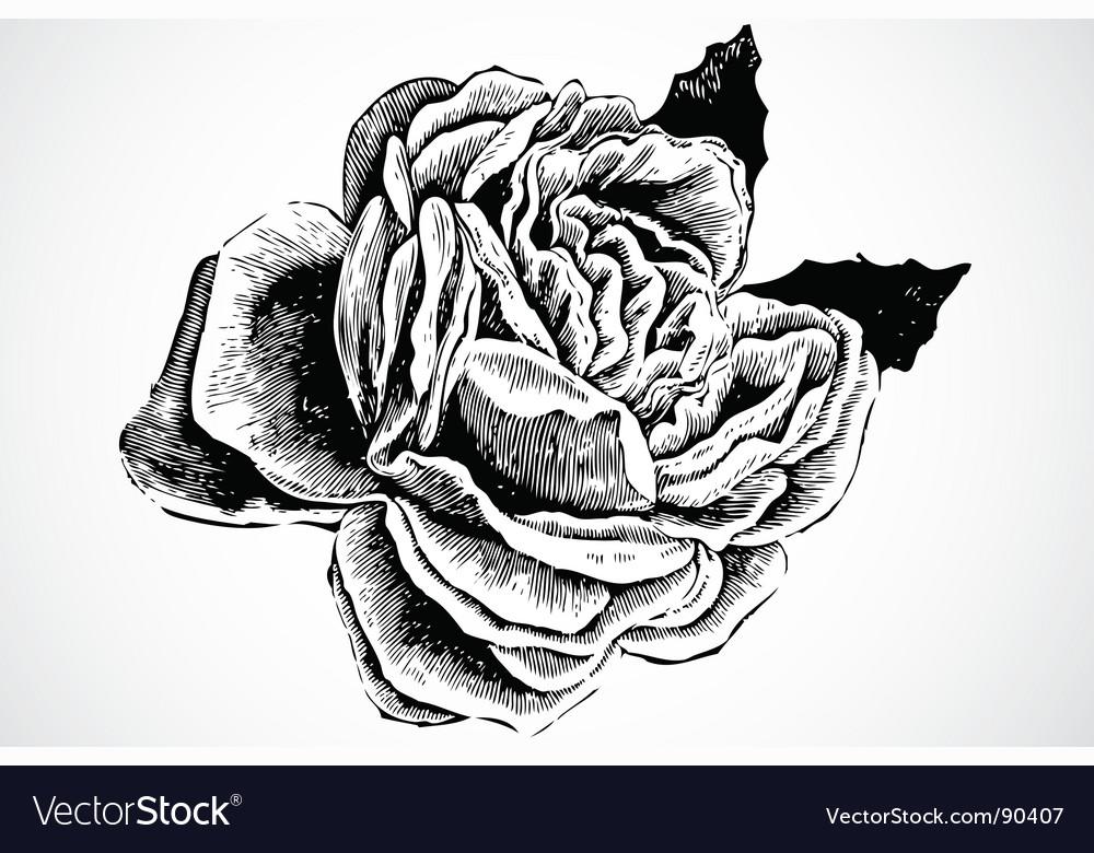 Woodcut rose vector image