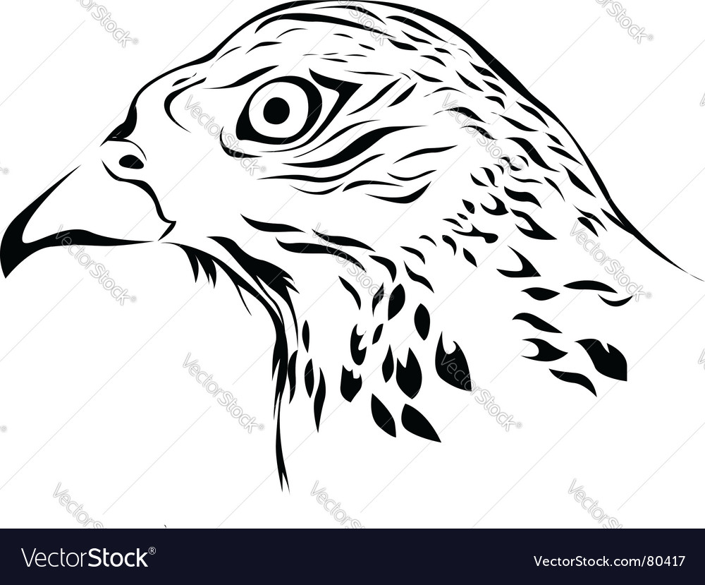 Wild hawk vector image