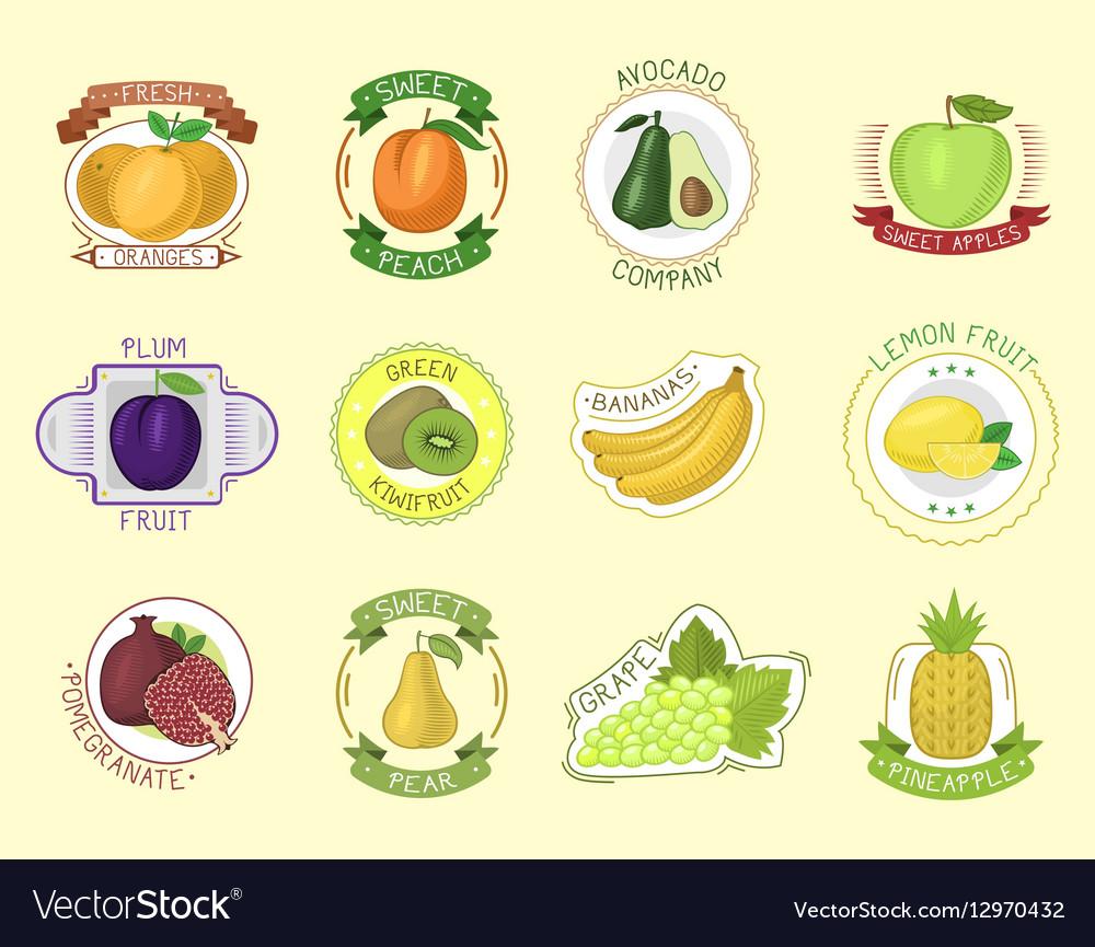 Fruits badges vector image