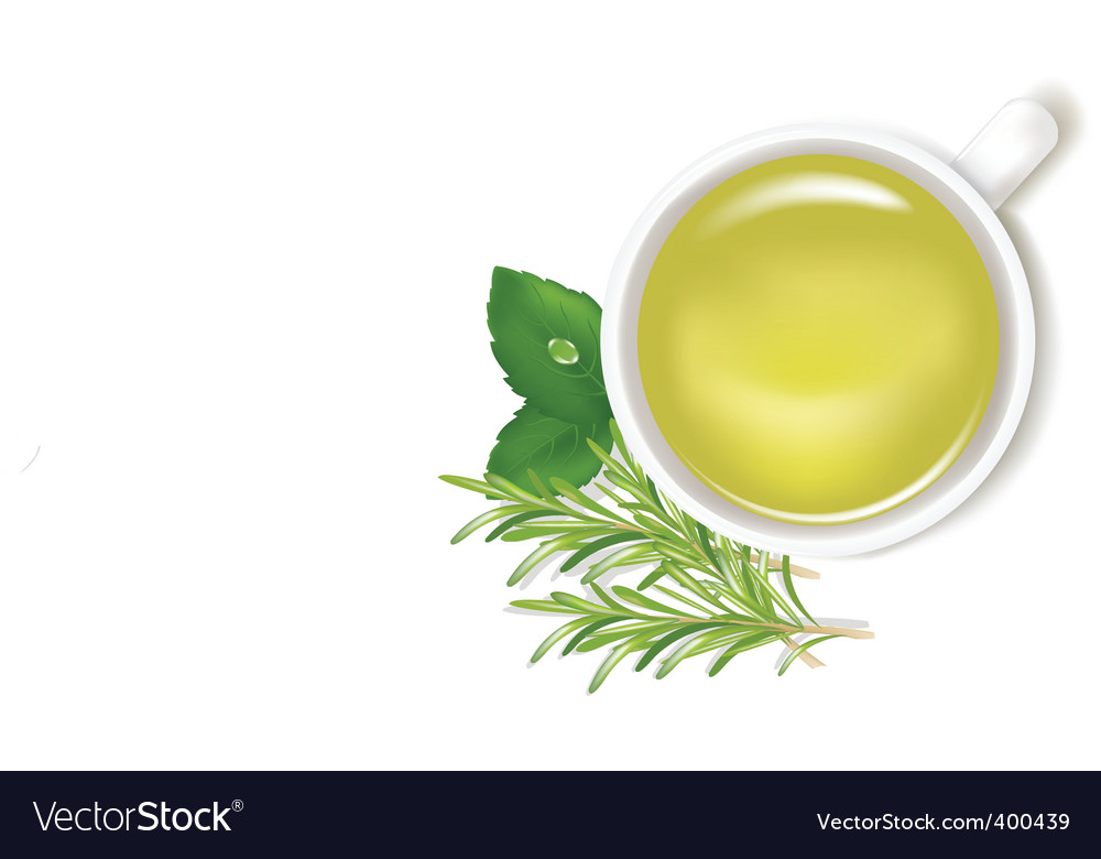 Herbal tea vector image