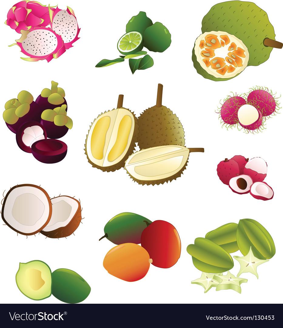 Thai fruits vector image