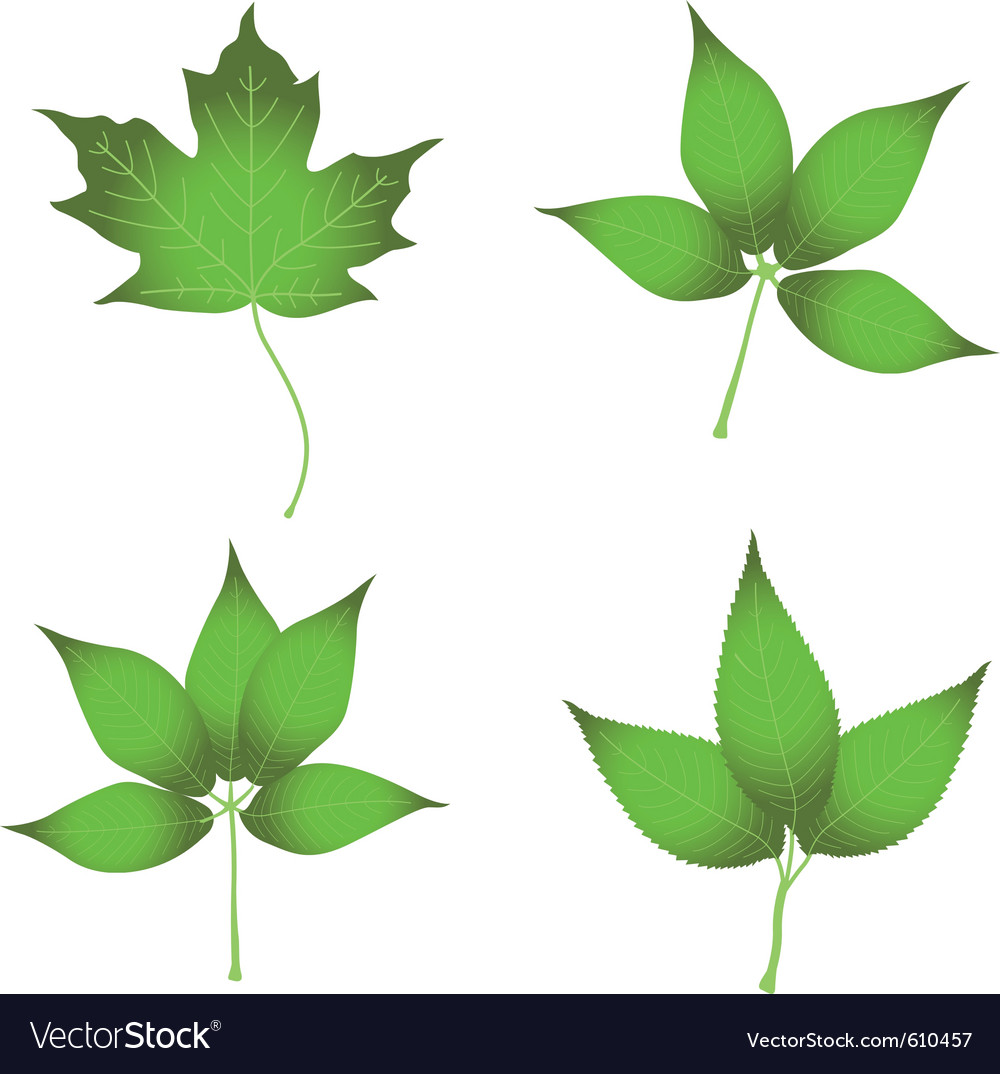 set of leaves royalty free vector image vectorstock