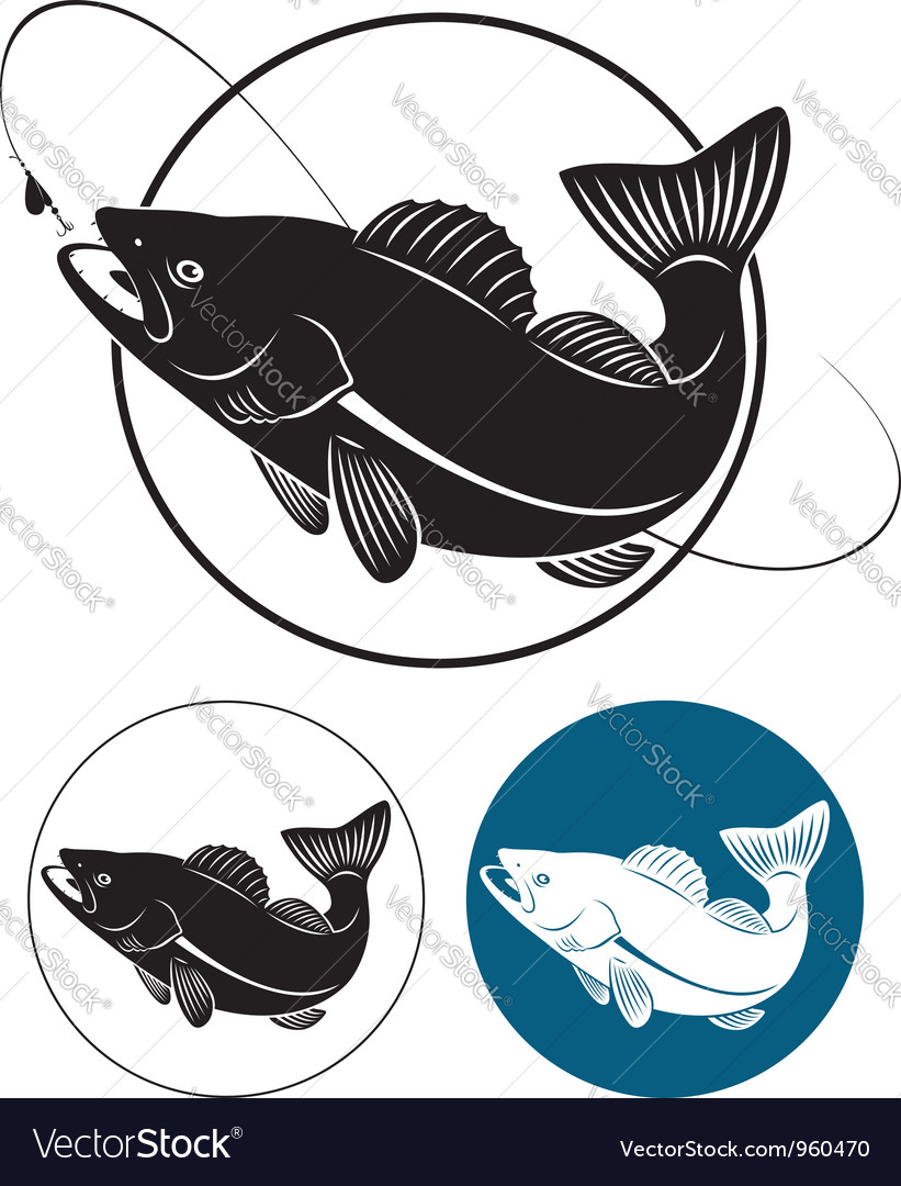 Walleye vector image