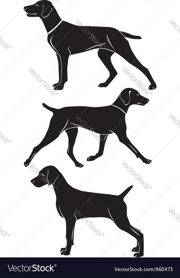 Weimaraner dog vector image