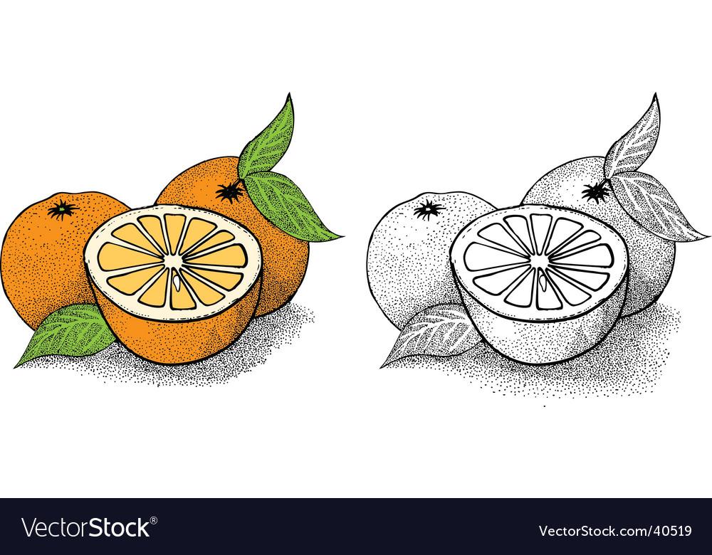 Orange illustration vector image