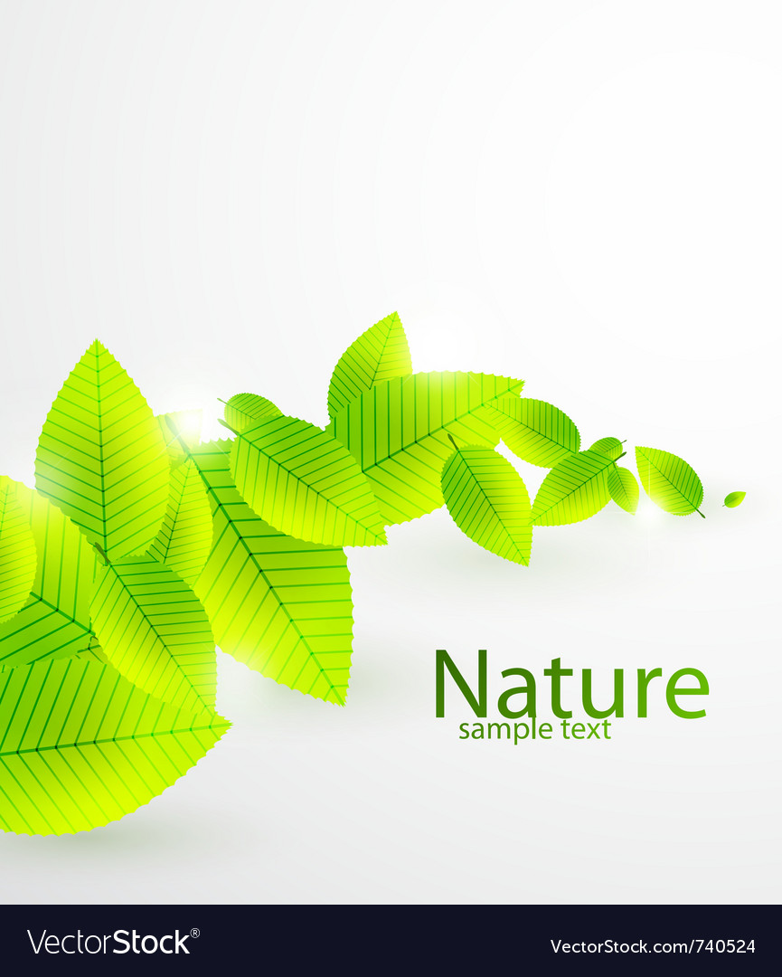 Abstract leaves background vector image