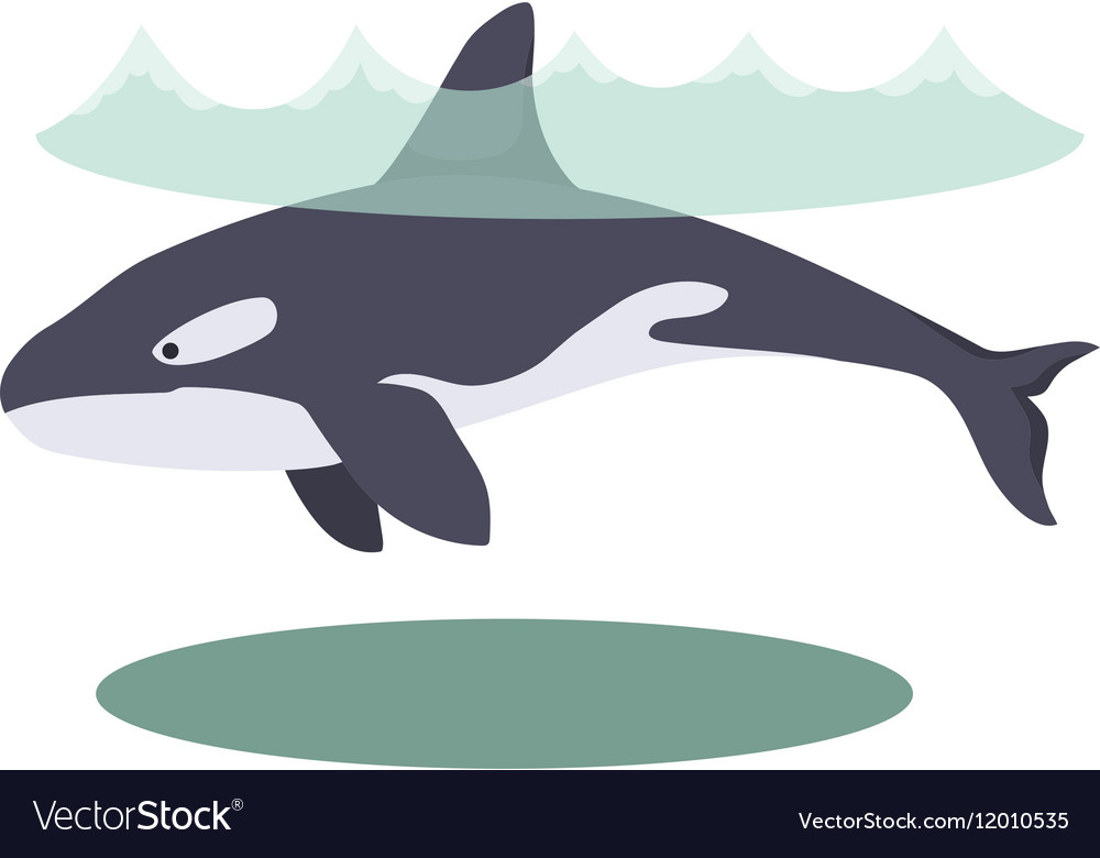 A cartoon beautiful killer whale vector image