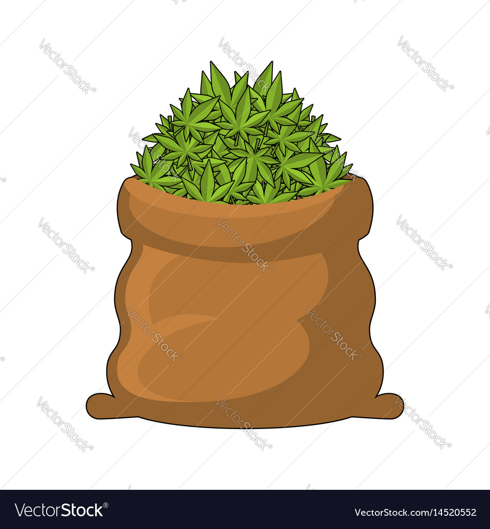 Full sack of cannabis large bag of marijuana vector image