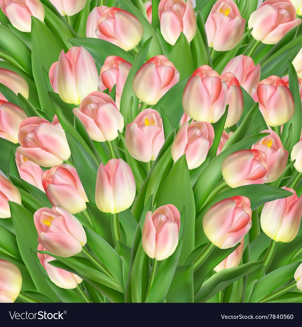 Greeting card with tulips flowers EPS 10 vector image