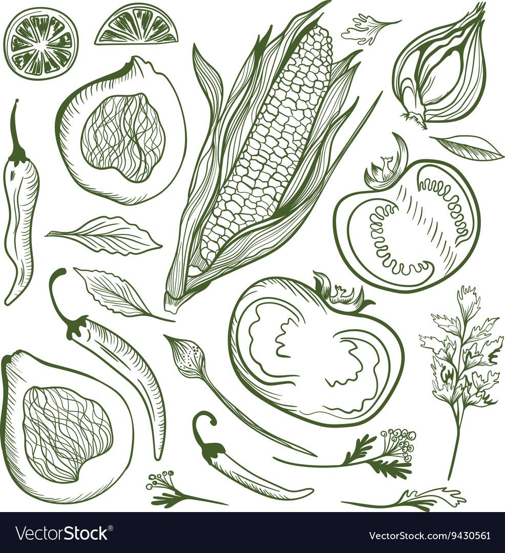 Vegetable Sketch Set vector image