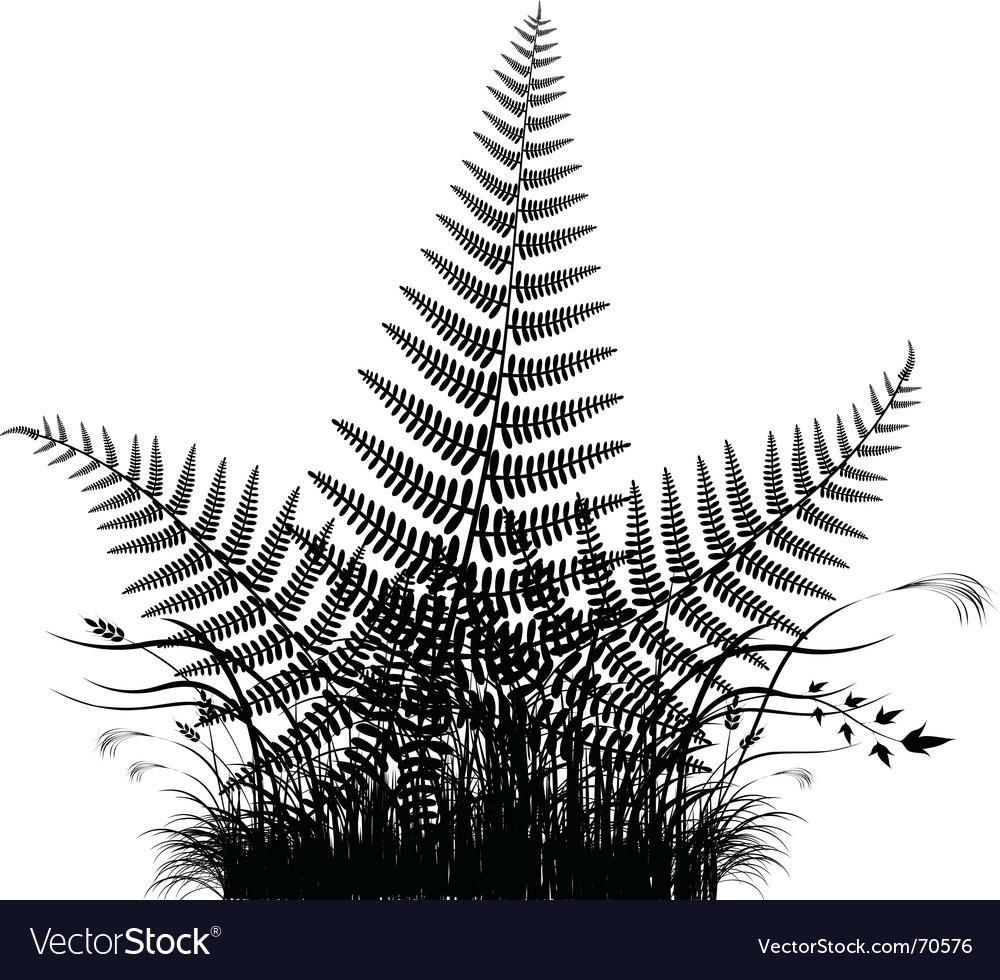 Fern vector image