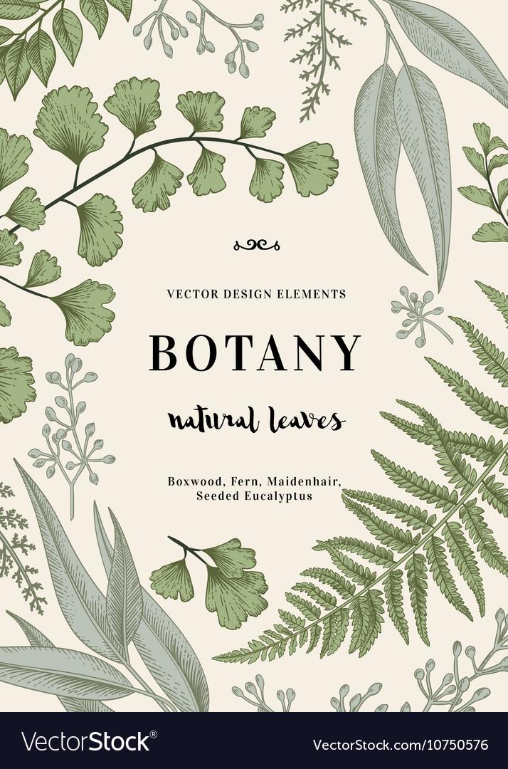 Floral background Vintage invitation vector image