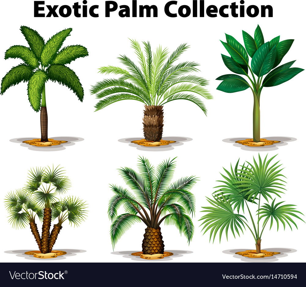 Different types of exotic palm trees Royalty Free Vector