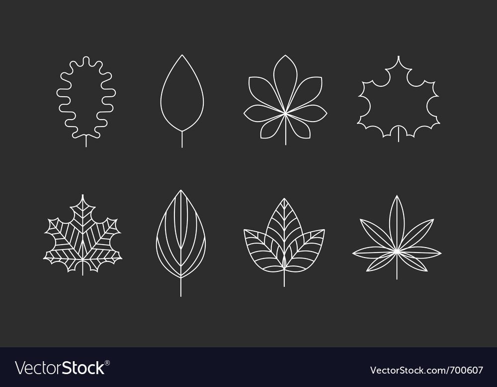 Outlined leaves icons Vector Image