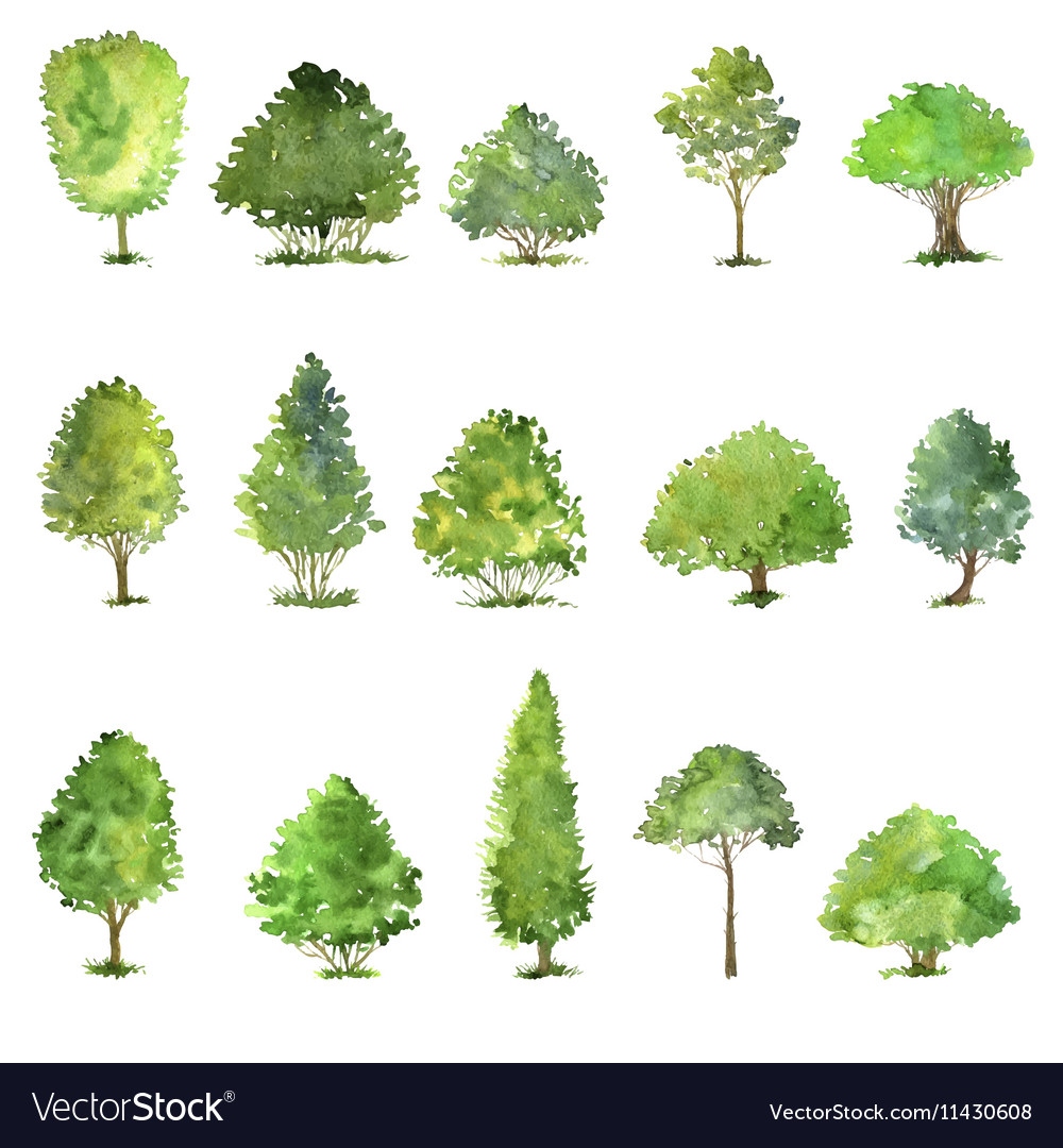 Set of trees drawing by watercolor Royalty Free Vector Image for Tree Drawing With Watercolor  585ifm