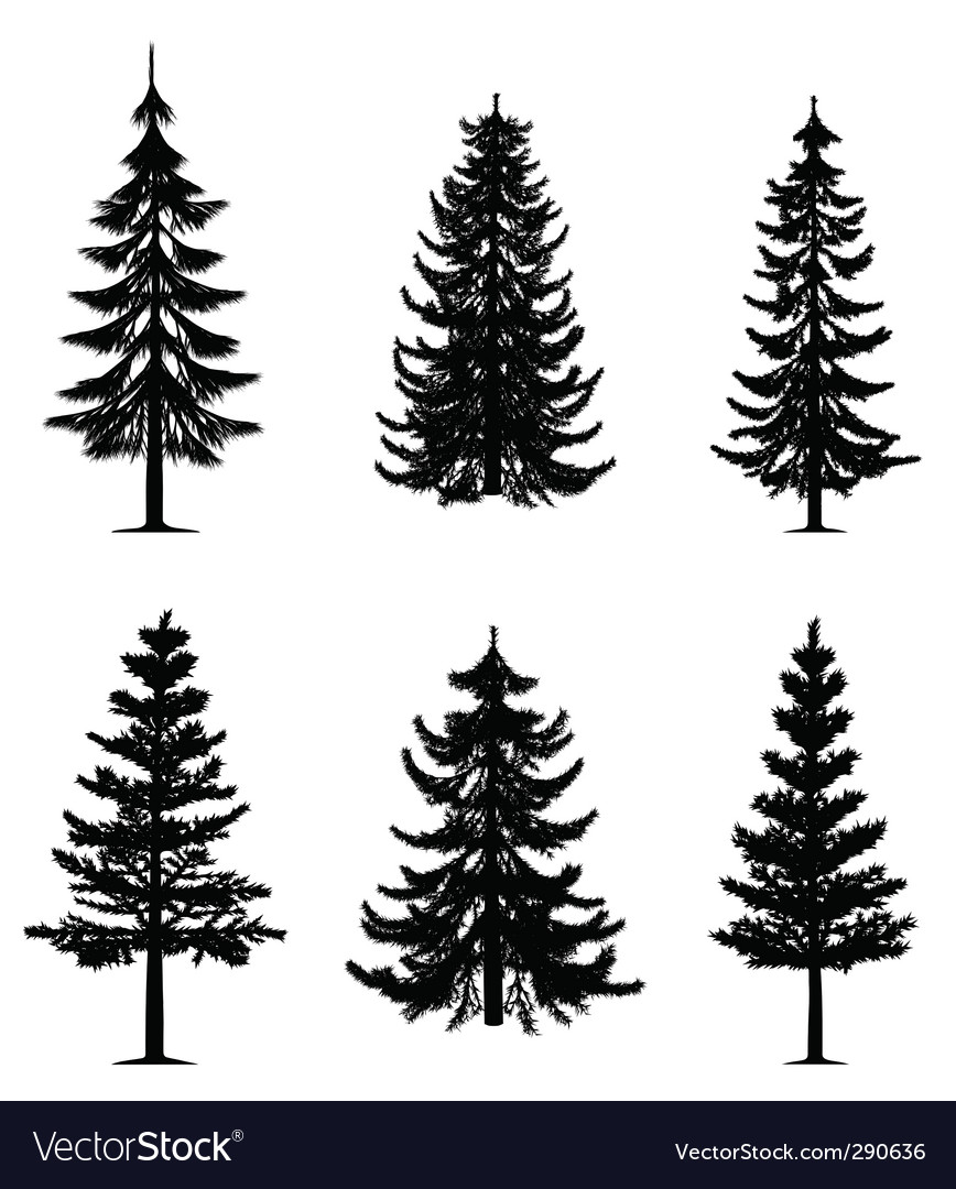 Pine trees collection vector image