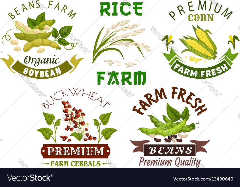 Vegetable cereal bean farm emblem set design vector image