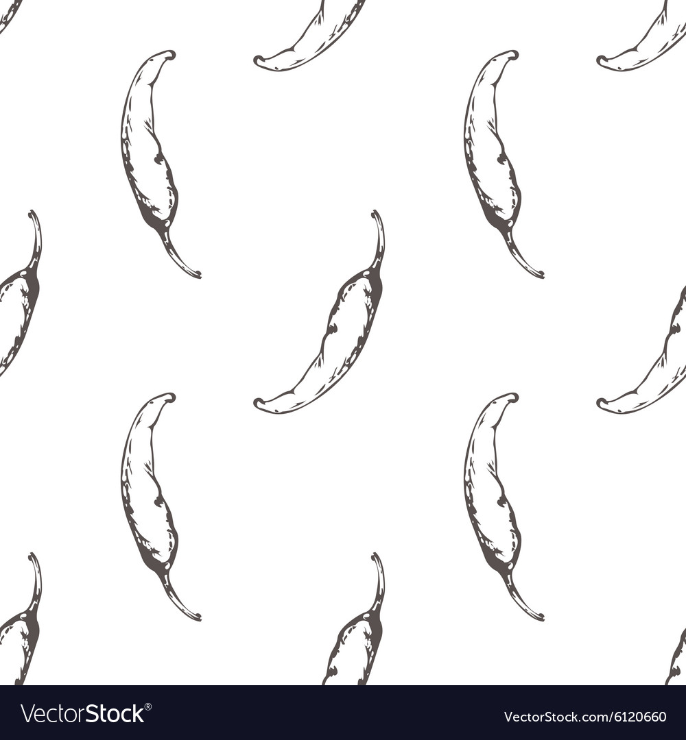 Outline seamless pattern with hand drawn chilli vector image
