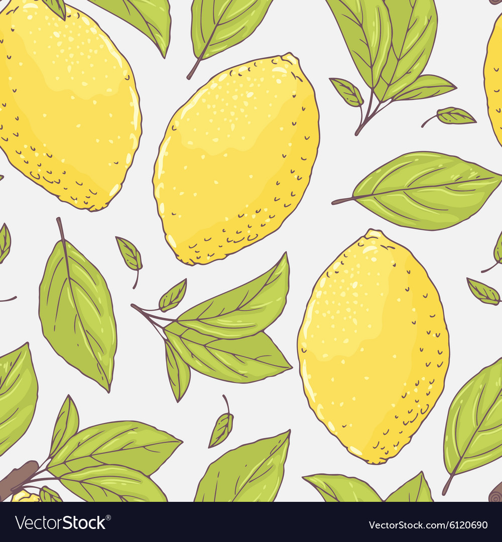 Seamless pattern with hand drawn lemon and leaves vector image