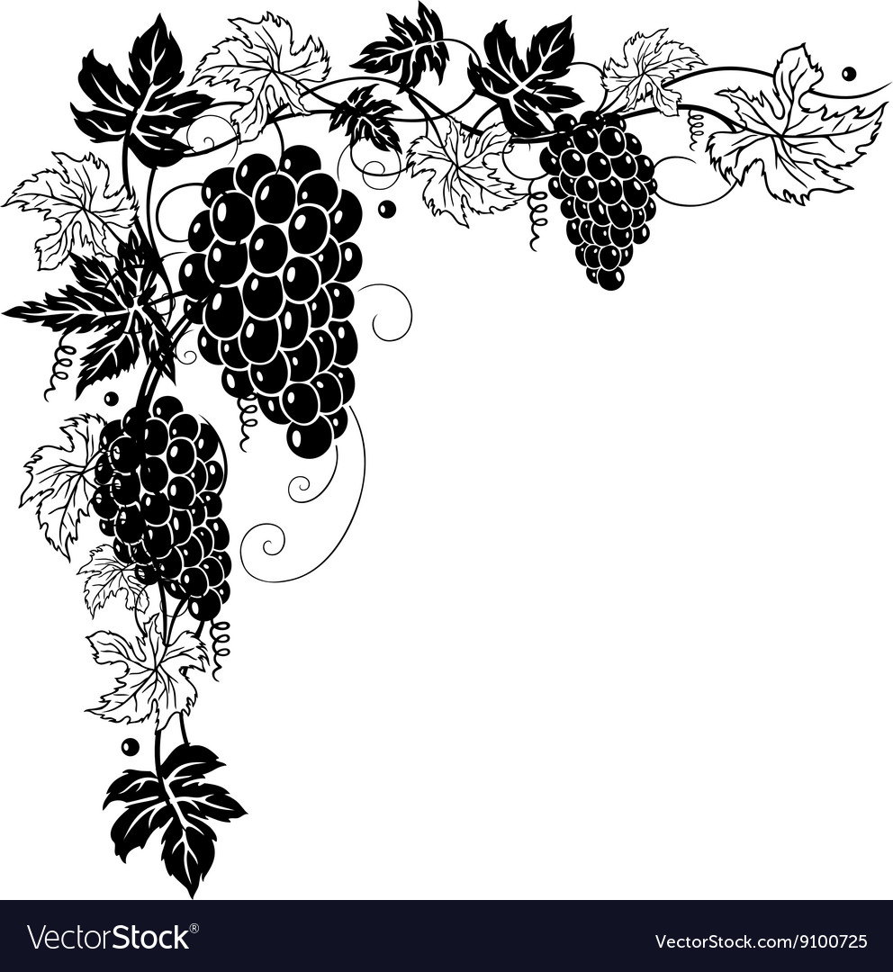 Vine leaves with grapes vector image