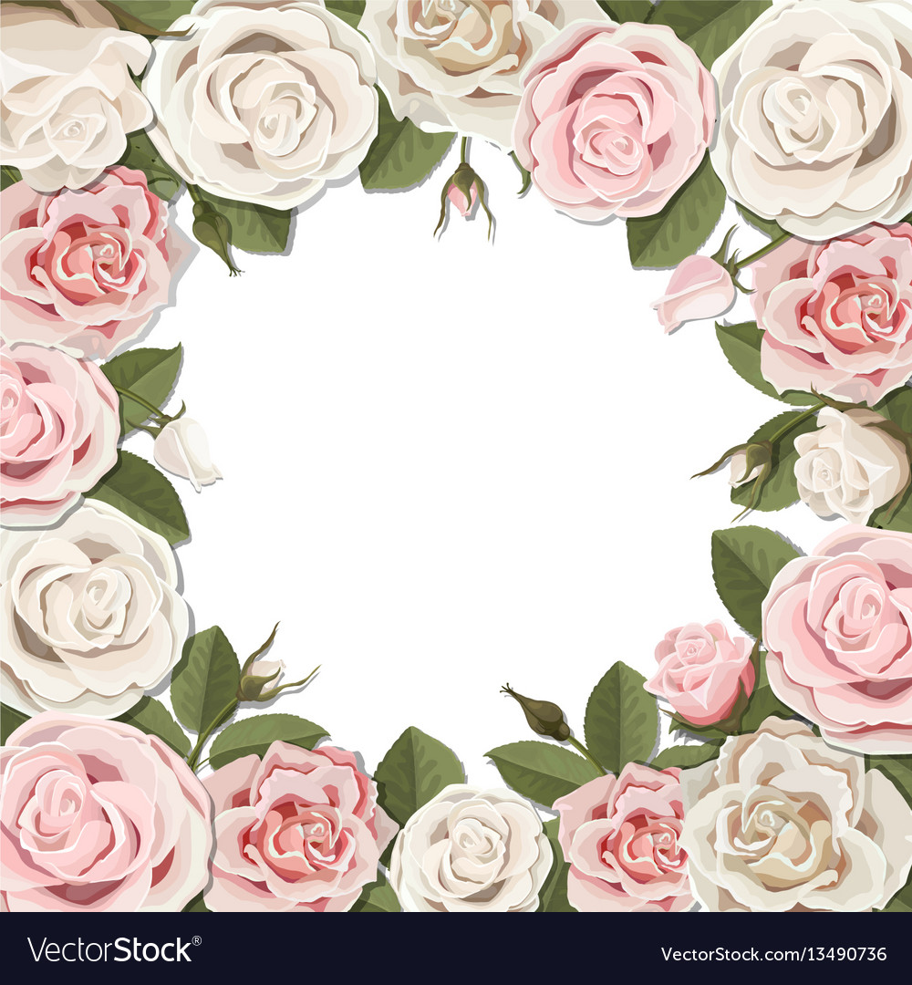 Blossom pink and white rose flowers frame vector image