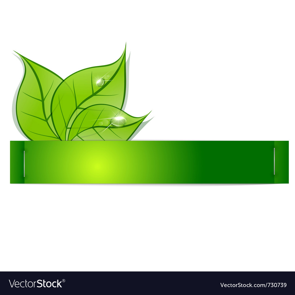 Paper strip with green leaves and drops of dew on vector image