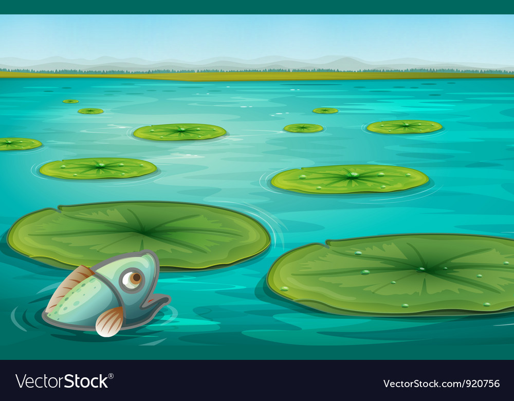 Lily pads Royalty Free Vector Image  VectorStock