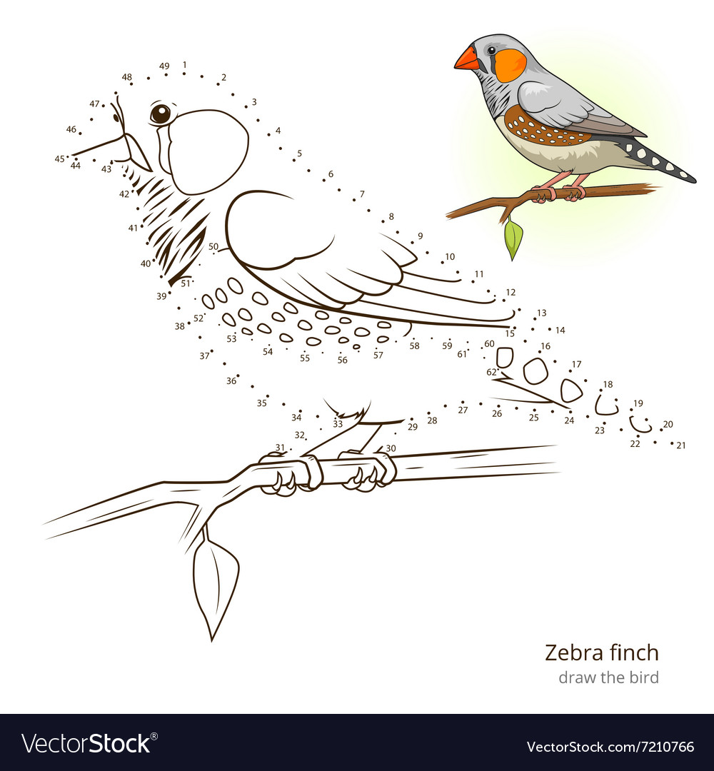 Zebra finch bird learn to draw royalty free vector image zebra finch bird learn to draw vector image biocorpaavc