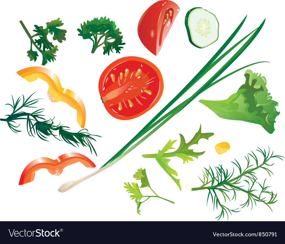 Set of colorful isolated vegetables vector image