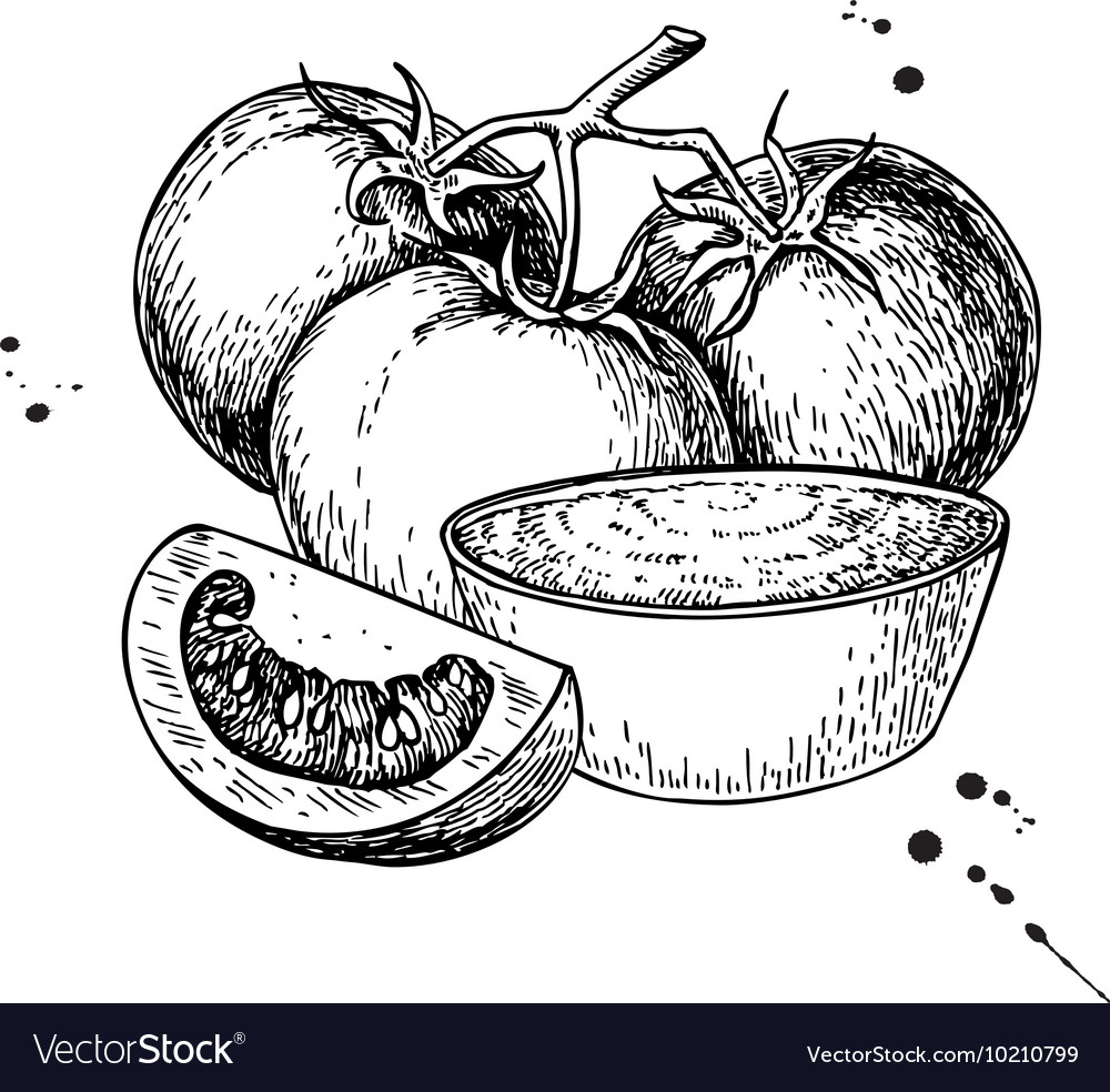 Tomato sauce Drawing isolated vector image