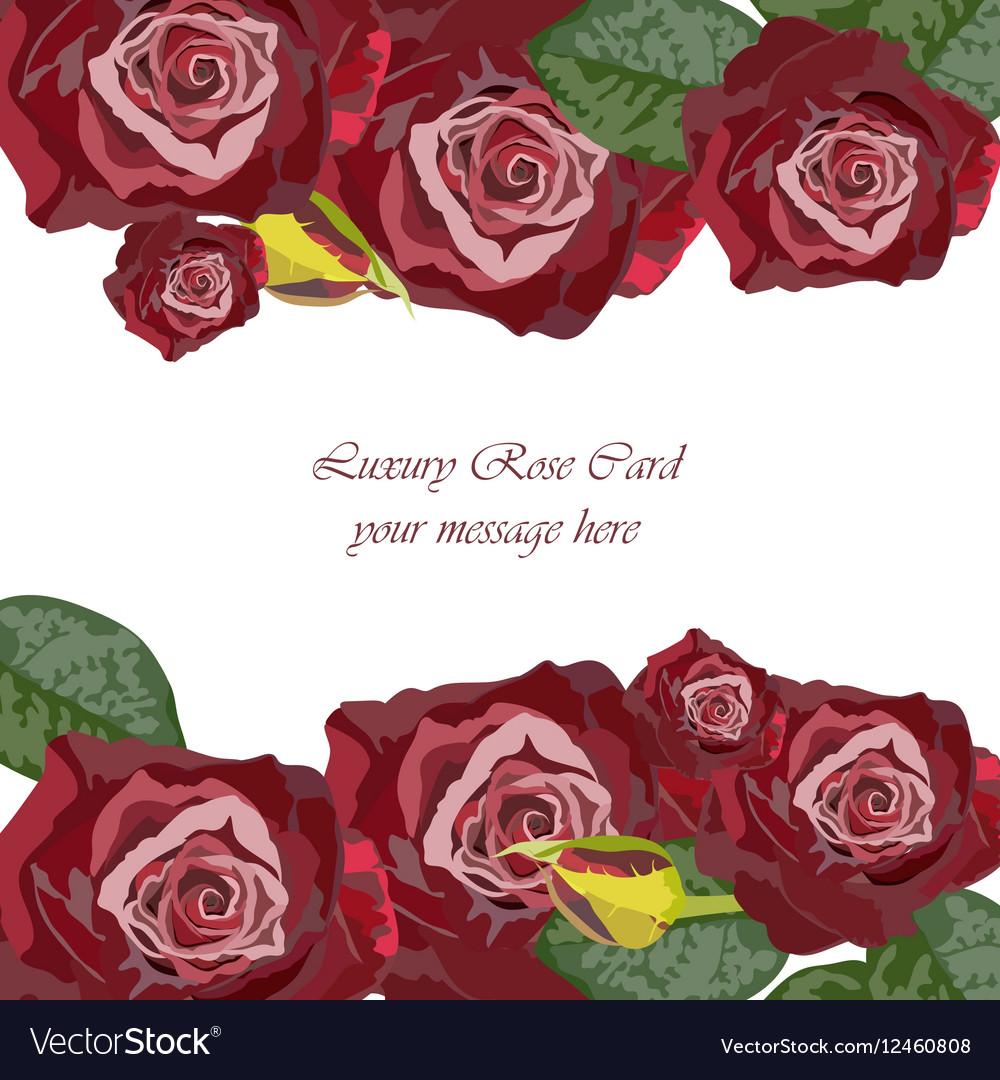 Watercolor Dark Red Rose card vector image