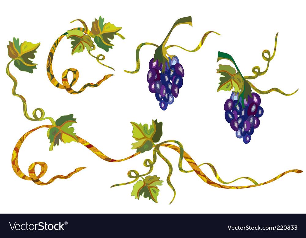 Grape vine design vector image