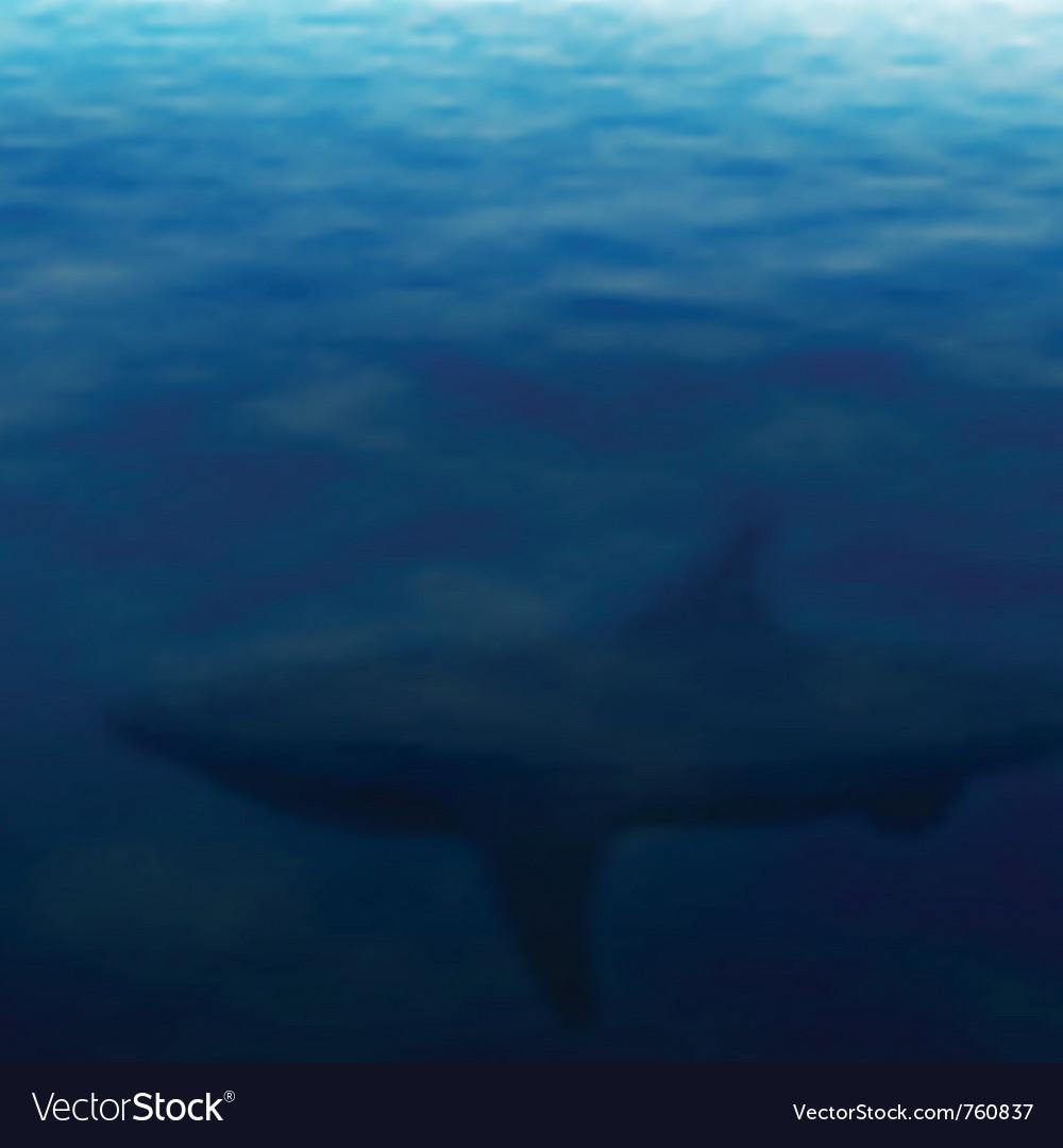 Lurking shark vector image