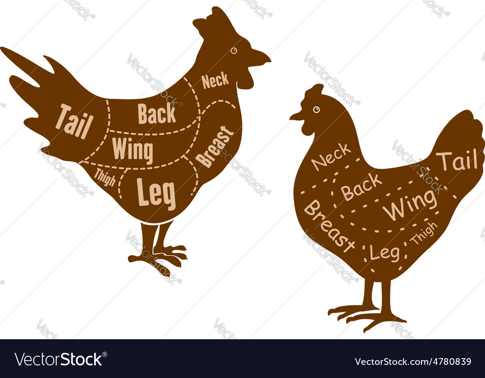 Rooster and hen butcher cuts diagram vector image