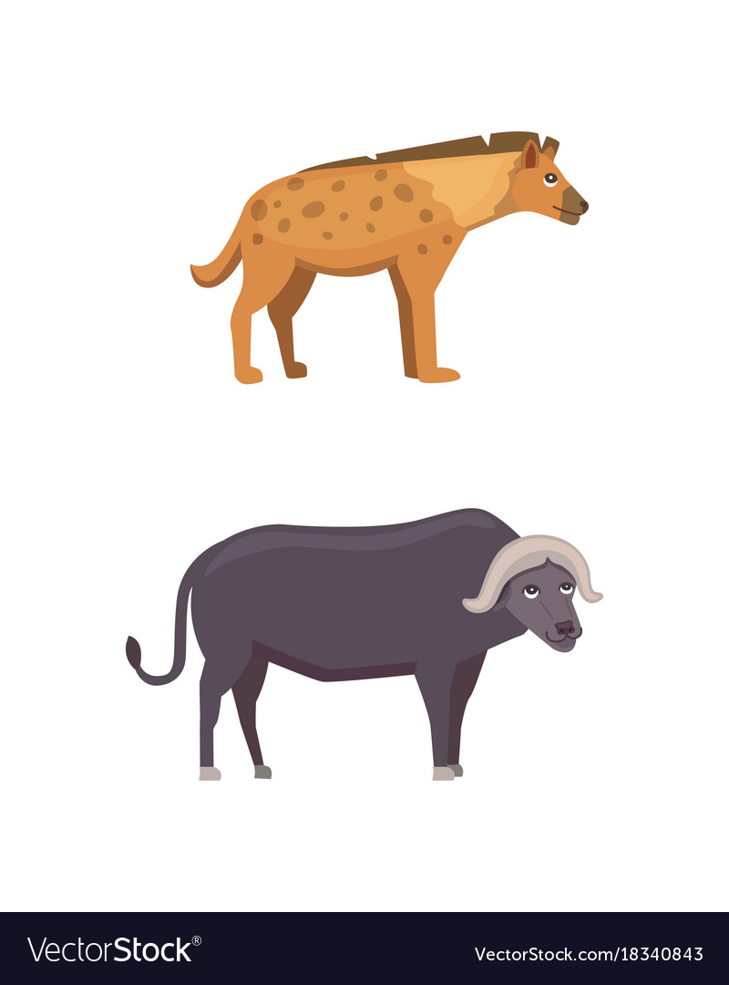 Buffalo and hyena safari isolated vector image