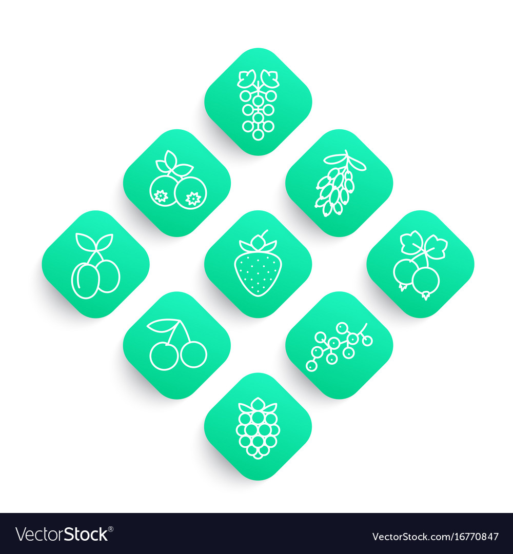 Berries line icons set vector image