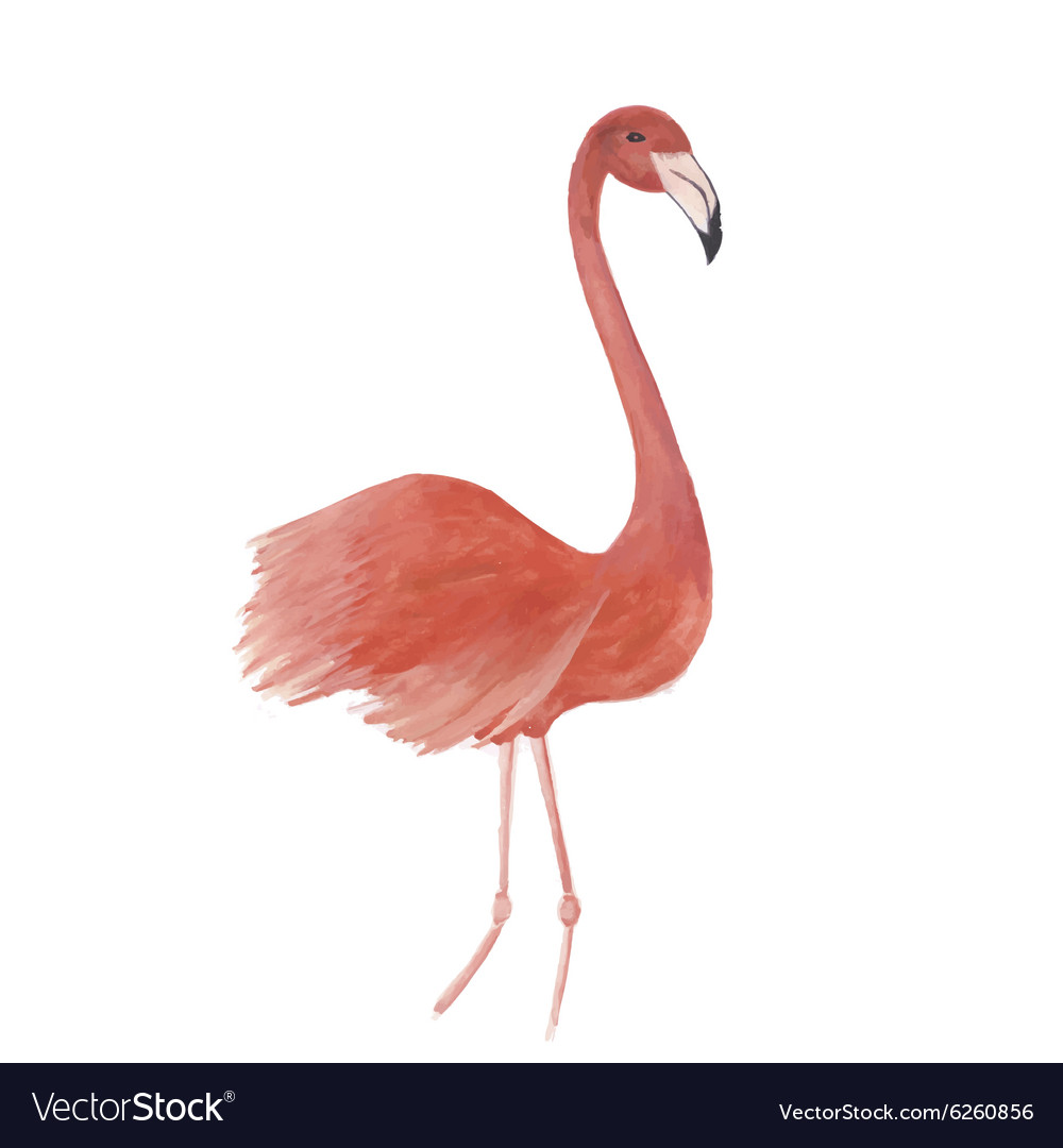 Flamingo watercolor isolated bird vector image