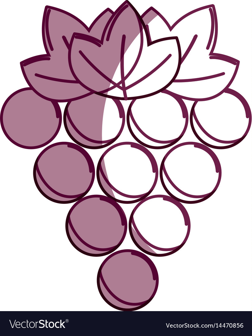 Silhouette delicious grape healthy fruit vector image