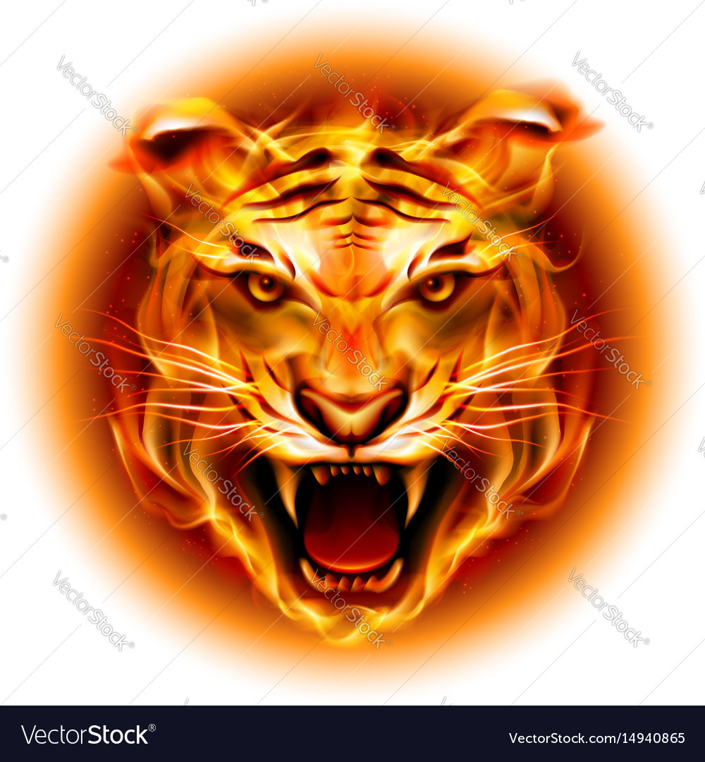 Head of agressive fire tiger isolated on white vector image