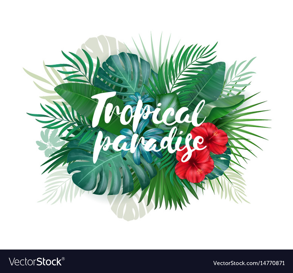 Tropical paradise label over background with vector image