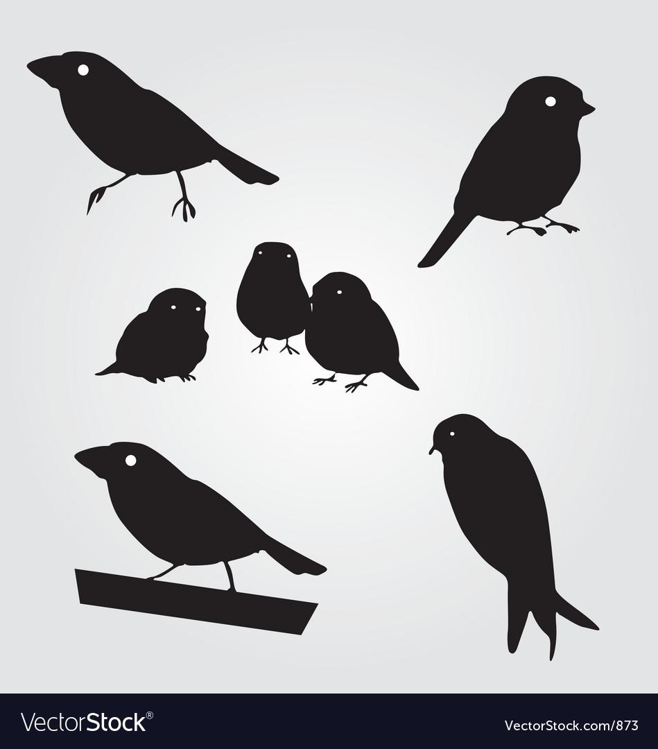 Budgies vector image