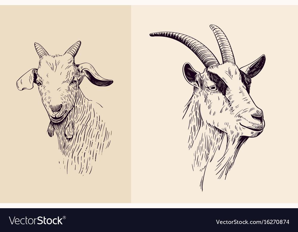 Goat line art vector image
