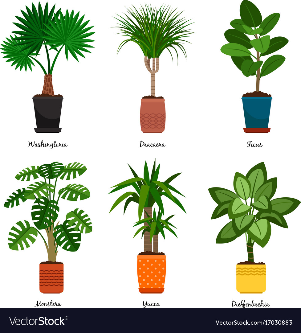Decorative indoor palm trees in pots Royalty Free Vector
