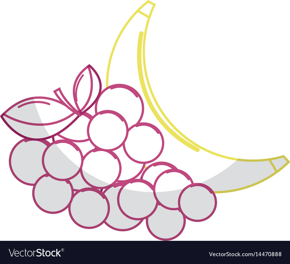 Silhouette delicious banana and grape fruit vector image