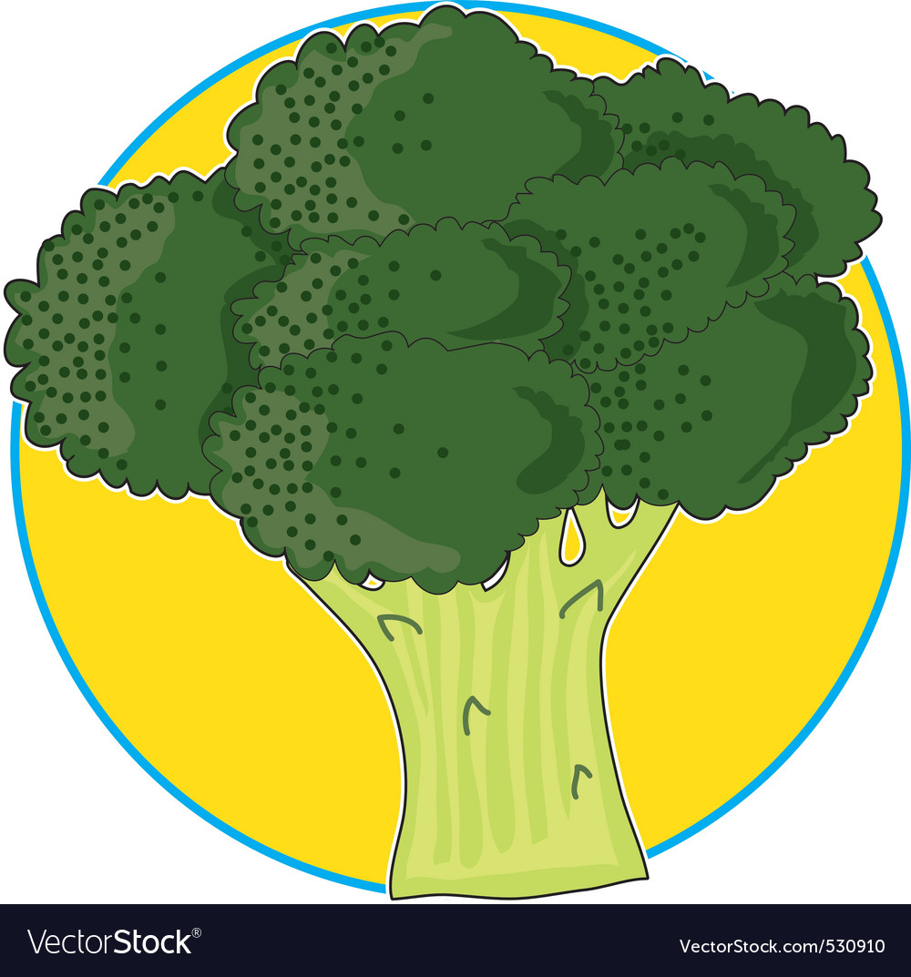 Broccoli graphic vector image