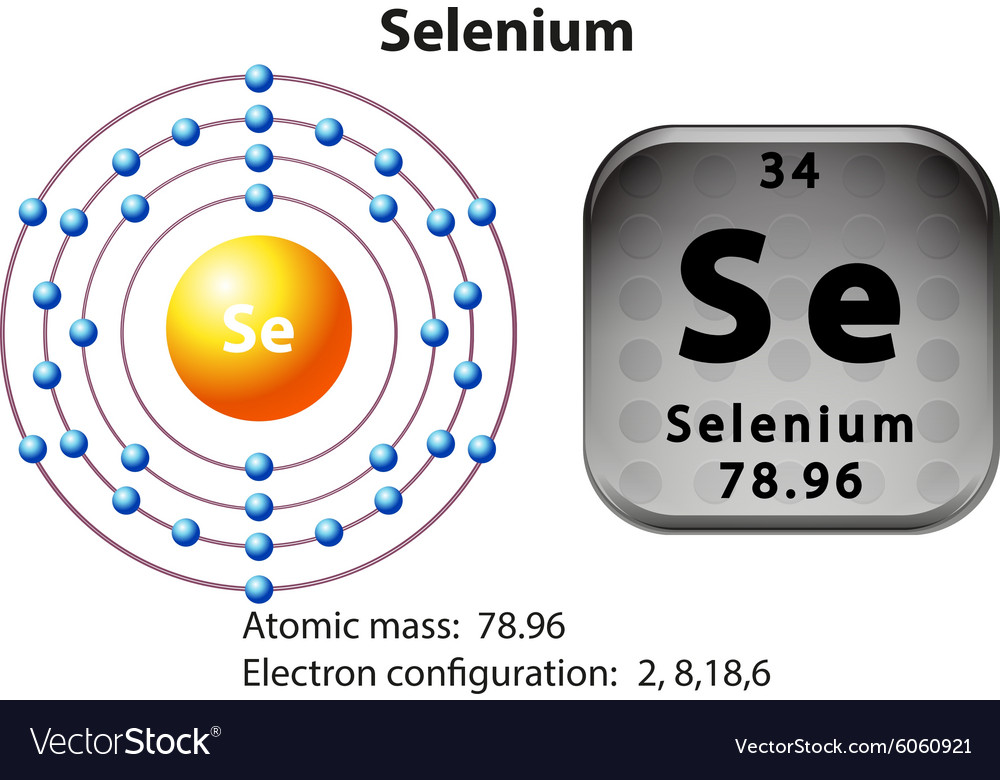 Symbol And Electron Diagram For Selenium Vector Image