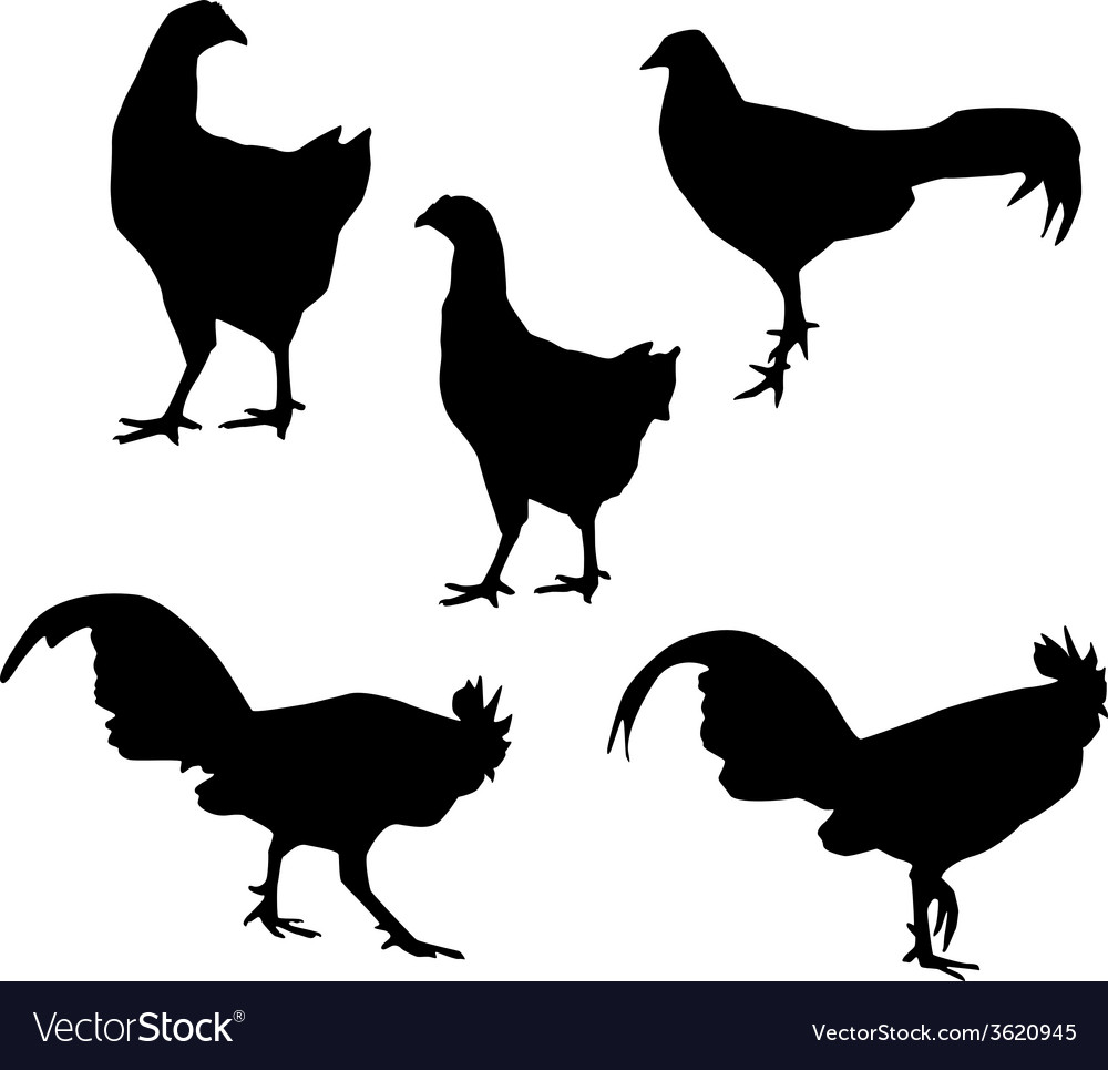 Hen and Rooster black silhouette on white vector image