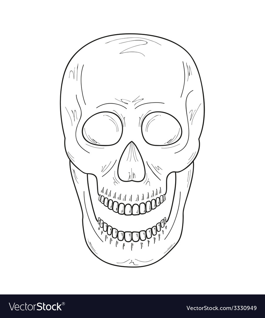 Sketch of the skull with open mouth vector image