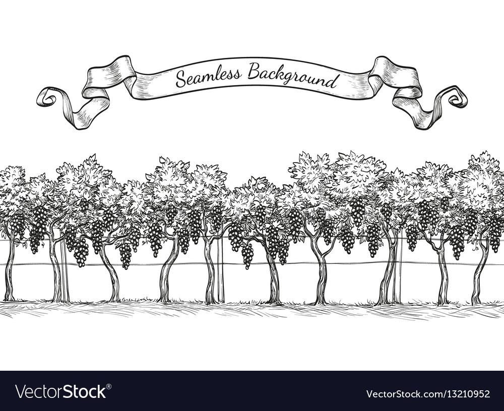 Vineyard seamless background vector image
